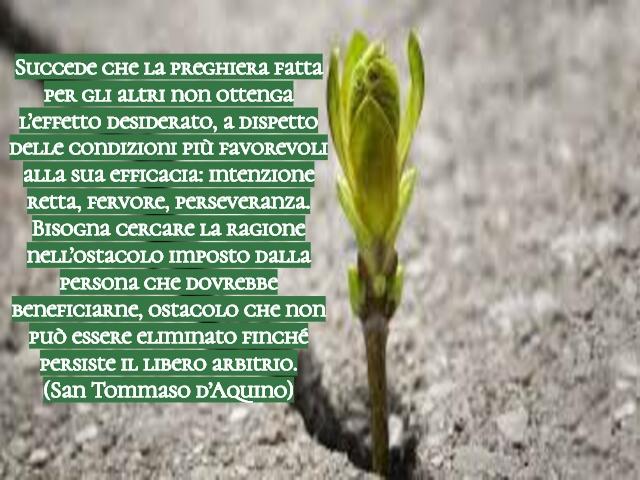 frasi sulla perseveranza 6