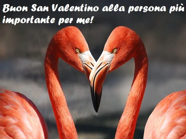 immagini per san valentino gratis